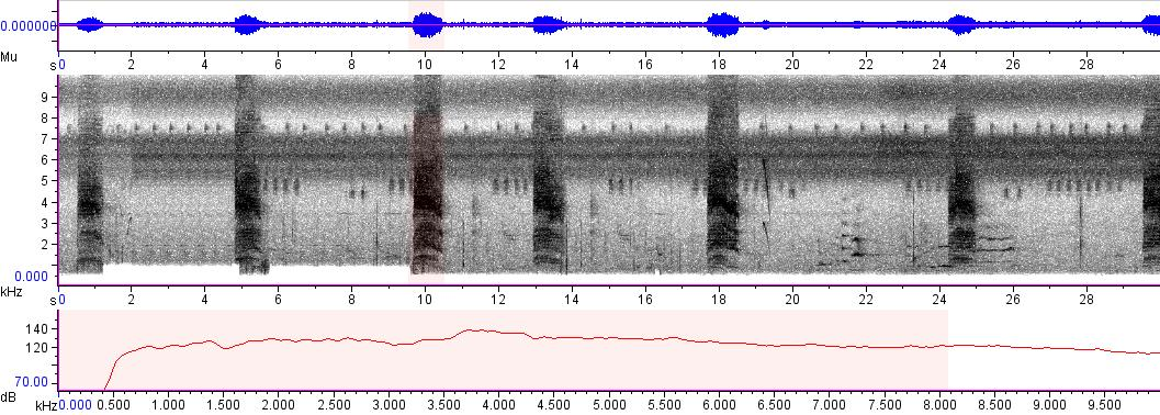 Sonogram of recording #AV 2183