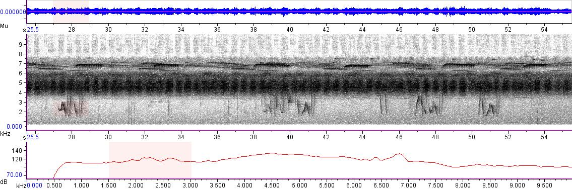 Sonogram of recording #AV 2243