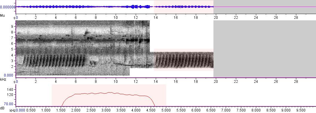 Sonogram of recording #AV 2412