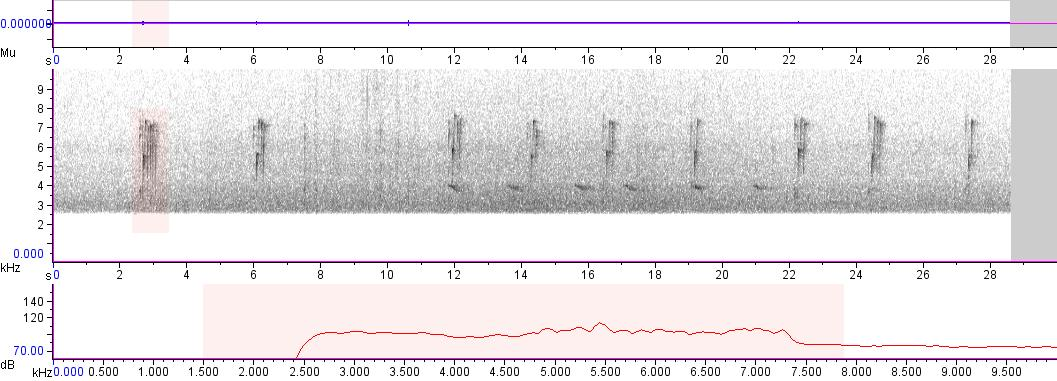 Sonogram of recording #AV 2455