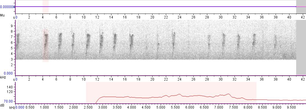 Sonogram of recording #AV 2456