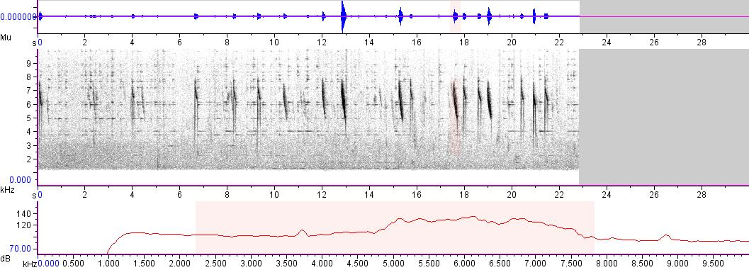 Sonogram of recording #AV 2464