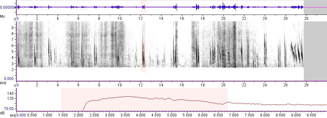 Sonogram of recording #AV 2501