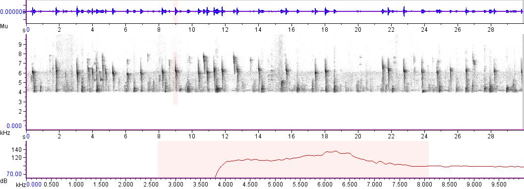 Sonogram of recording #AV 2535