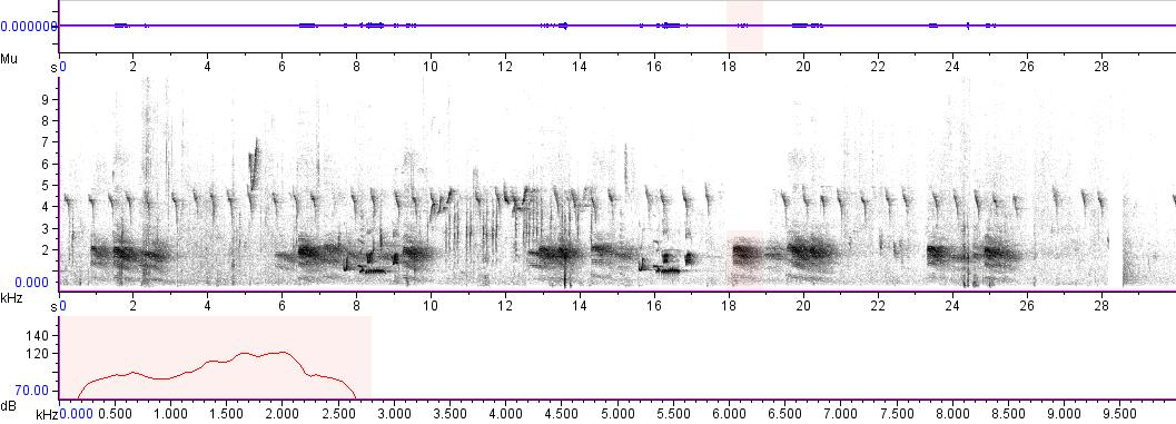 Sonogram of recording #AV 2558