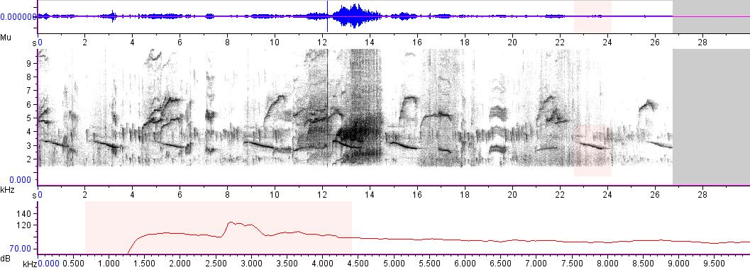 Sonogram of recording #AV 2664