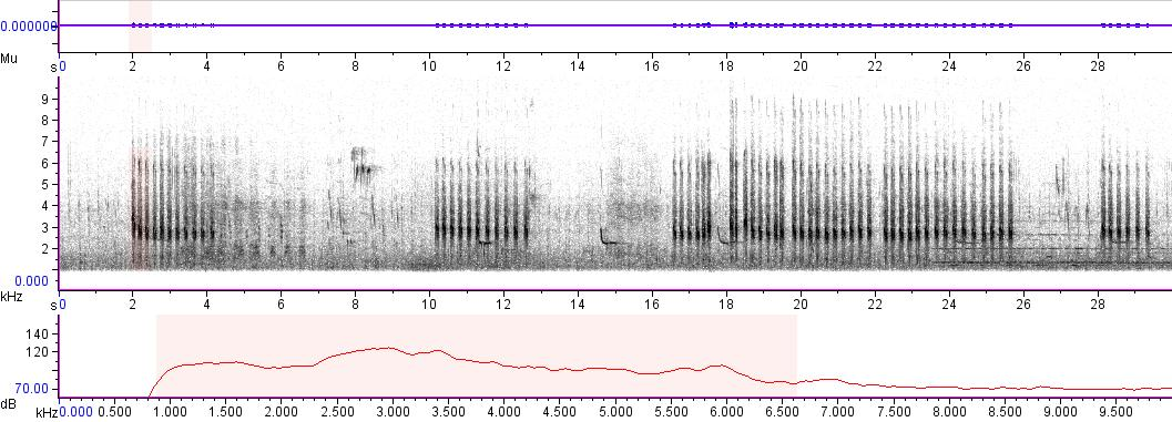 Sonogram of recording #AV 2681