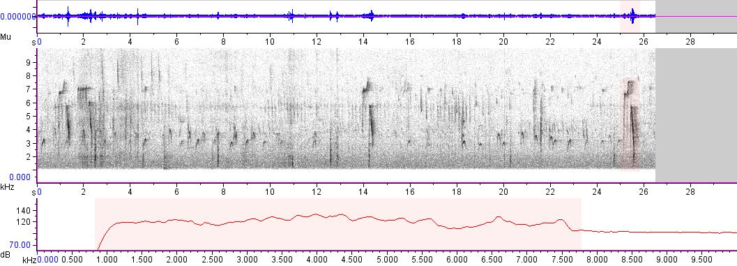 Sonogram of recording #AV 2773