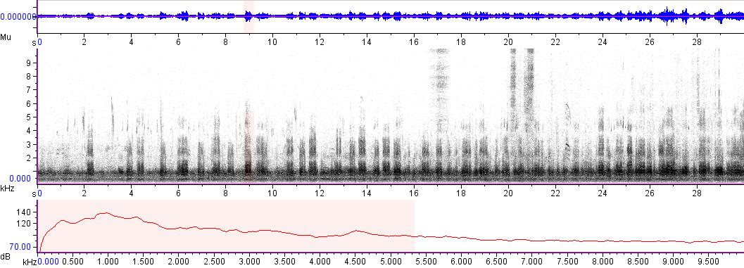 Sonogram of recording #AV 2803