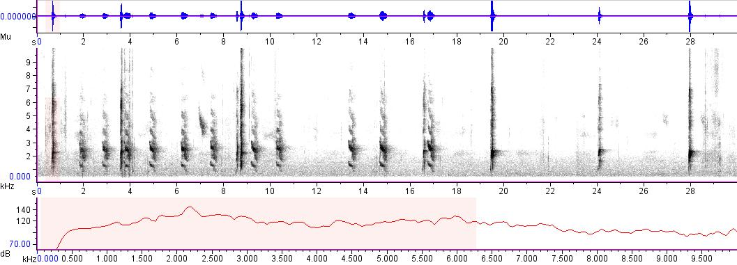 Sonogram of recording #AV 2842