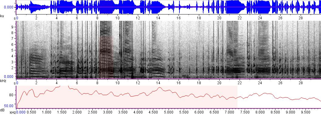 Sonogram of recording #AV 306