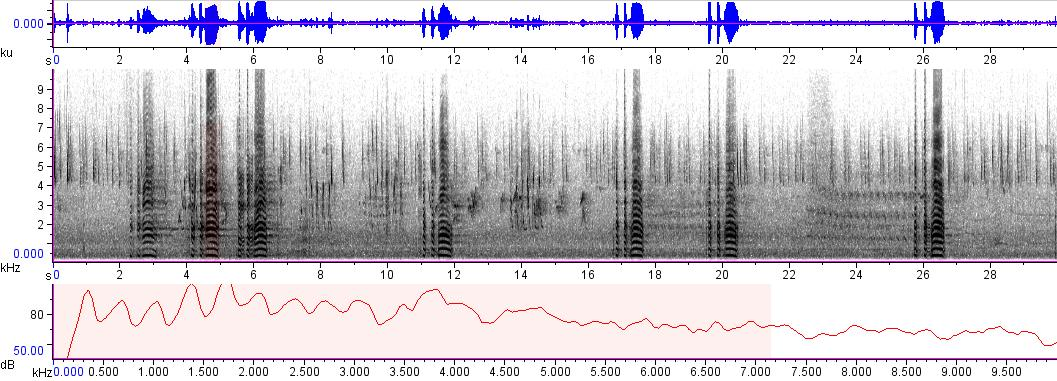 Sonogram of recording #AV 329