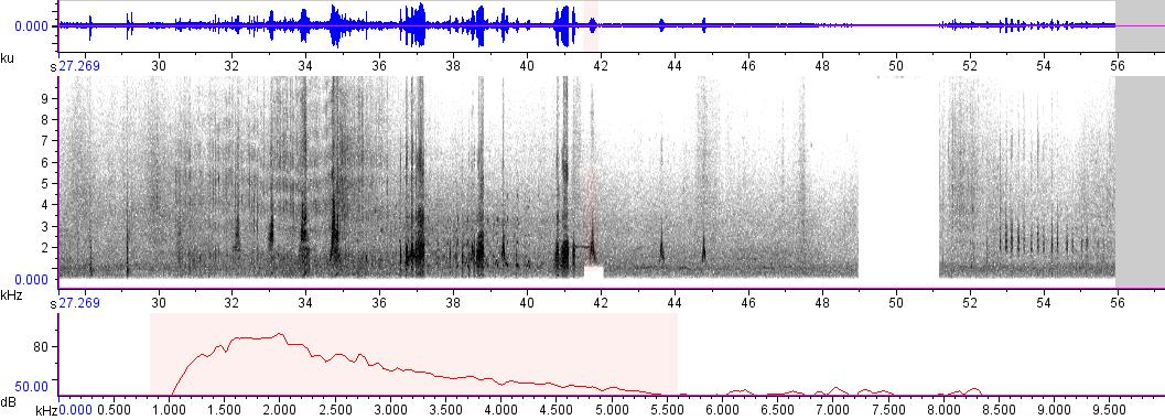 Sonogram of recording #AV 333