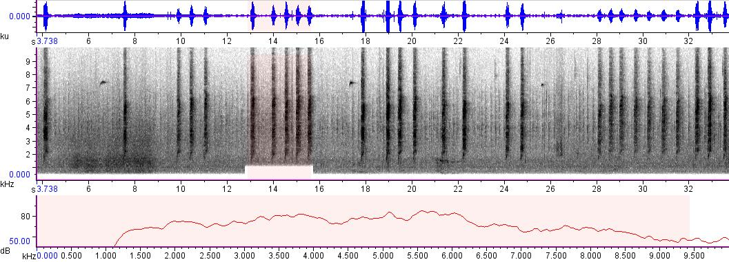 Sonogram of recording #AV 338