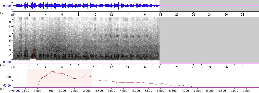 Sonogram of recording #AV 378