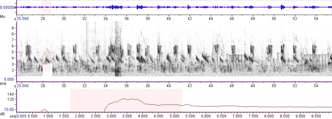 Sonogram of recording #AV 3059