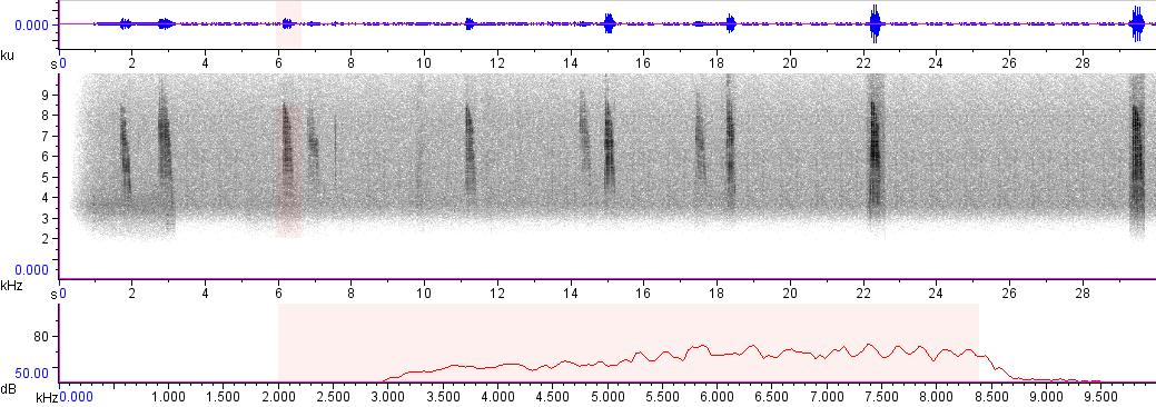 Sonogram of recording #AV 3064
