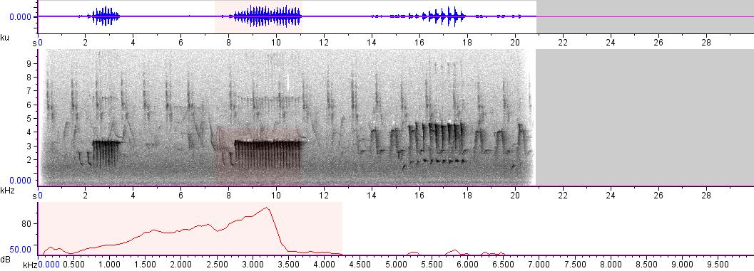 Sonogram of recording #AV 3097