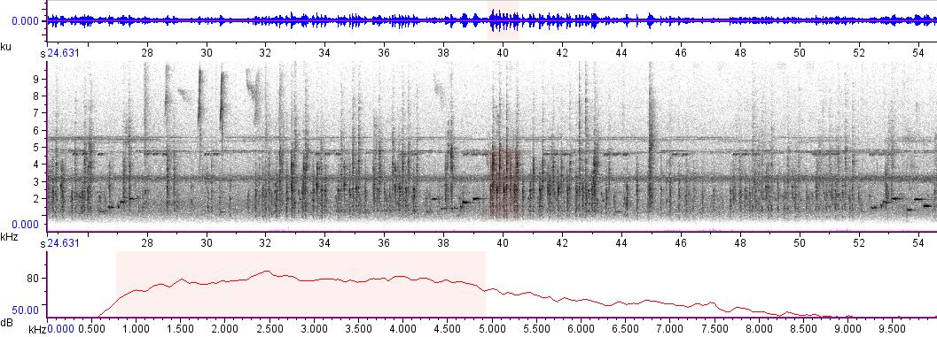 Sonogram of recording #AV 3137