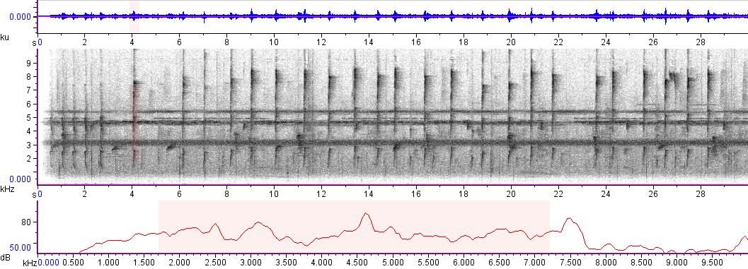 Sonogram of recording #AV 3160