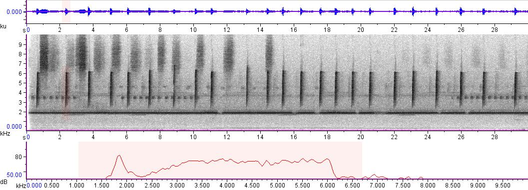 Sonogram of recording #AV 3164