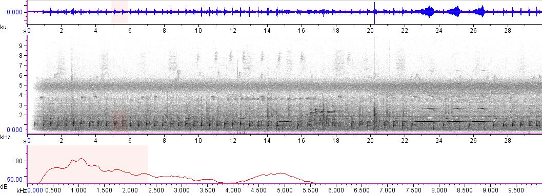 Sonogram of recording #AV 3172