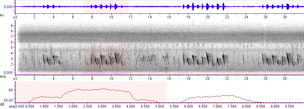 Sonogram of recording #AV 3190