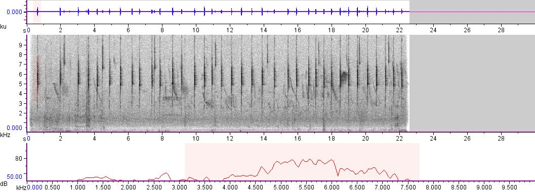 Sonogram of recording #AV 3206