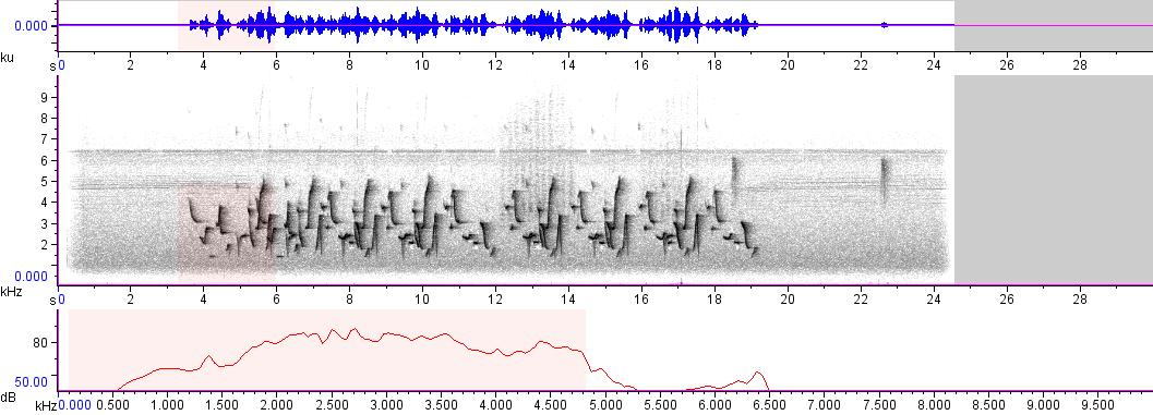 Sonogram of recording #AV 3224