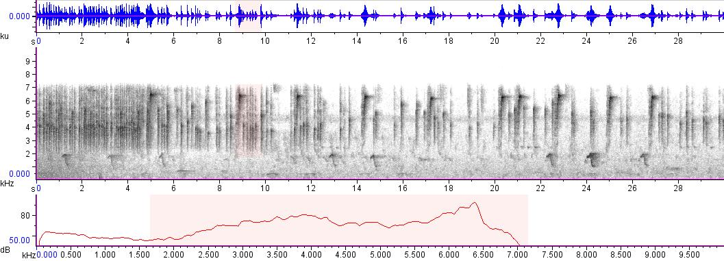 Sonogram of recording #AV 3244