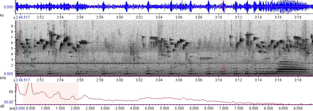 Sonogram of recording #AV 3263