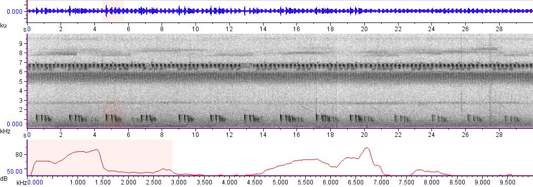 Sonogram of recording #AV 3271