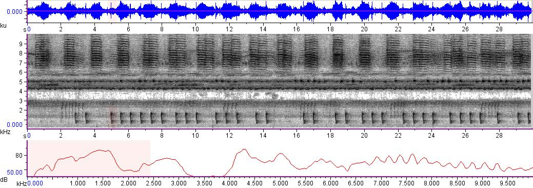 Sonogram of recording #AV 3272