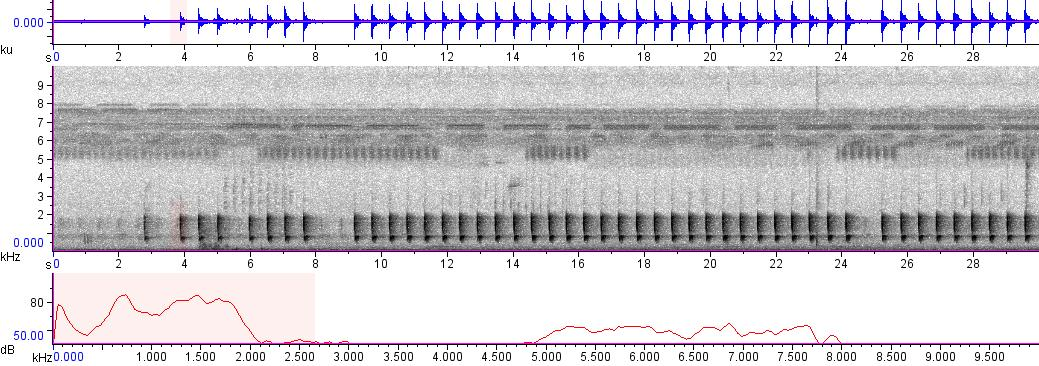 Sonogram of recording #AV 3273