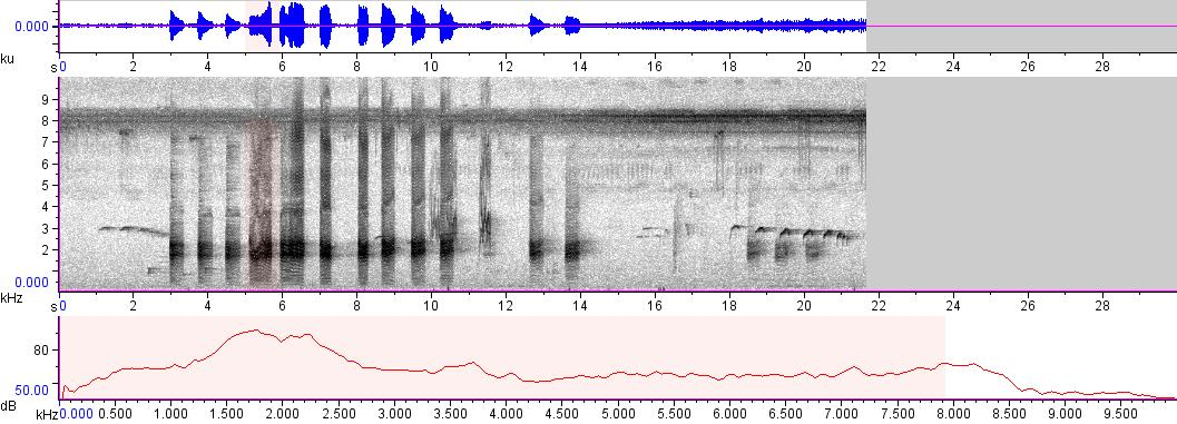 Sonogram of recording #AV 3291