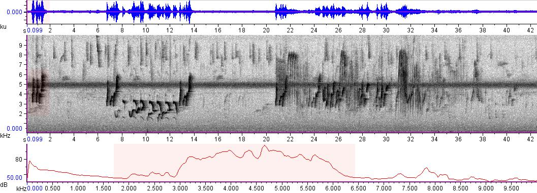Sonogram of recording #AV 3297