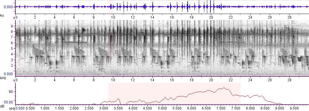 Sonogram of recording #AV 3303