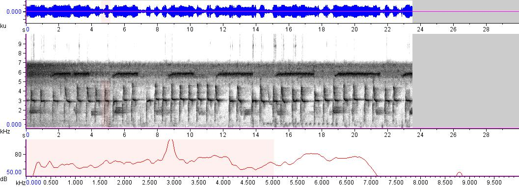 Sonogram of recording #AV 3321