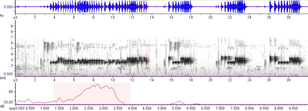 Sonogram of recording #AV 3347