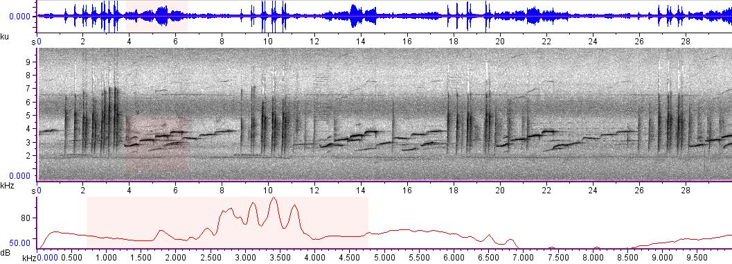 Sonogram of recording #AV 3357