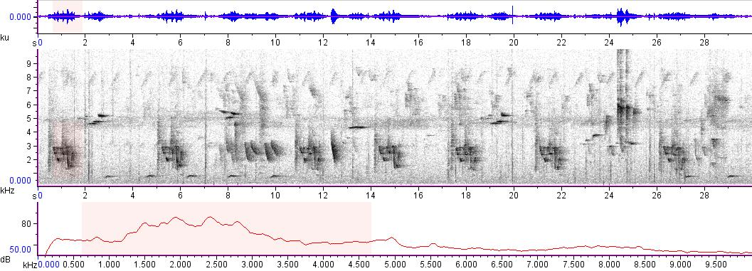 Sonogram of recording #AV 3360