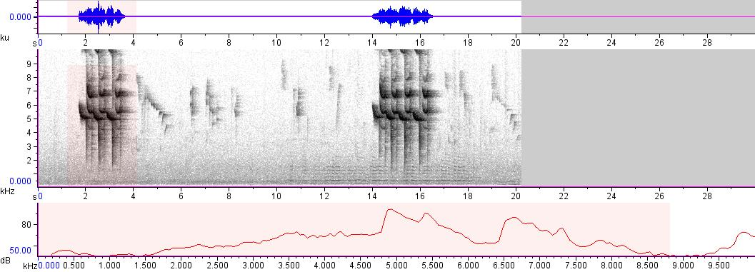 Sonogram of recording #AV 3361
