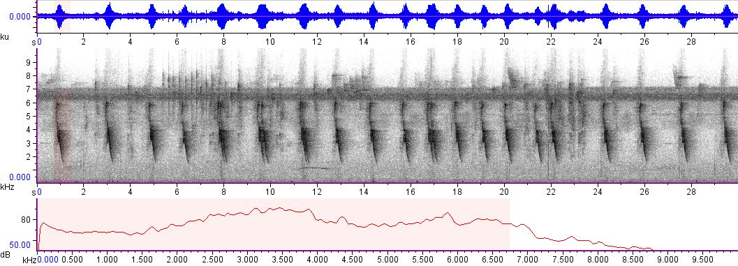 Sonogram of recording #AV 3365