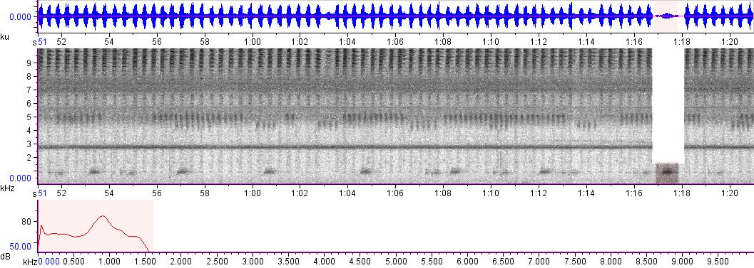 Sonogram of recording #AV 3371