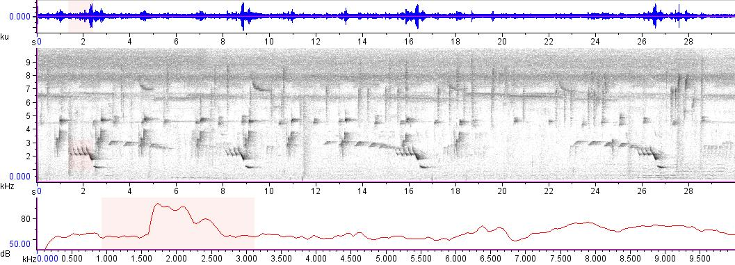 Sonogram of recording #AV 3385