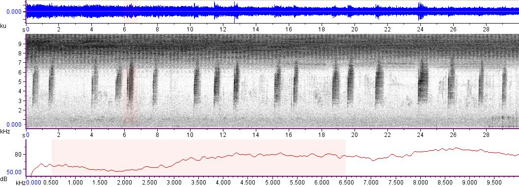 Sonogram of recording #AV 3408