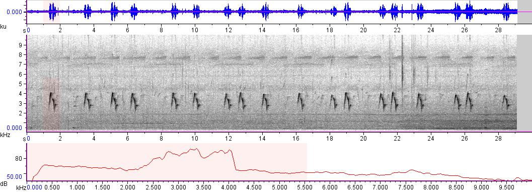 Sonogram of recording #AV 3410