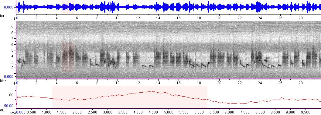 Sonogram of recording #AV 3411