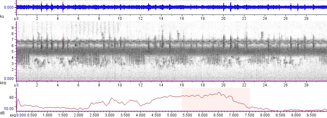 Sonogram of recording #AV 3414