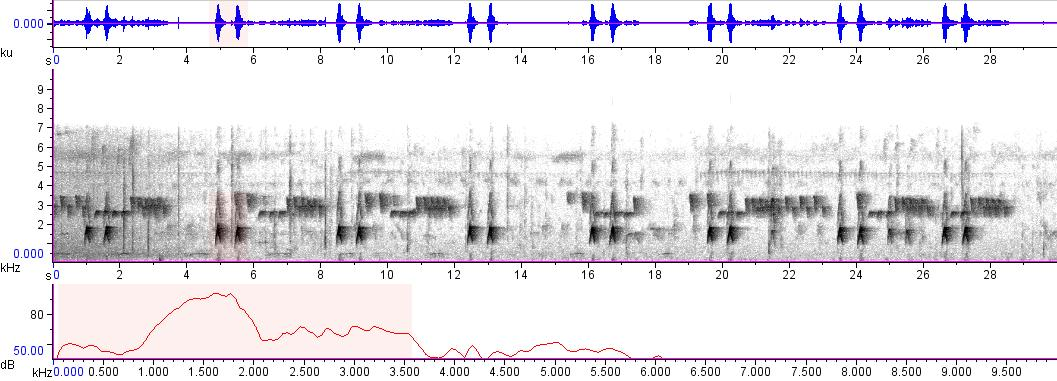 Sonogram of recording #AV 3431